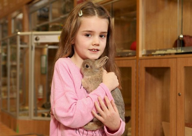 Pets At Home In Milton Keynes Stops Sales Of Rabbits Over Easter Milton Keynes Citizen
