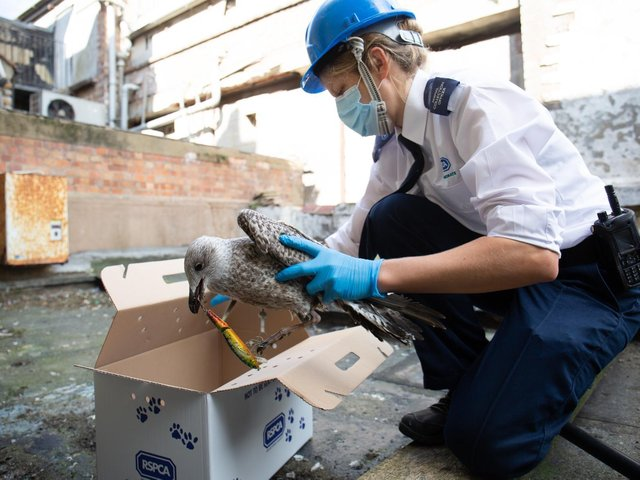 The RSPCA received almost 1 million calls during the pandemic
