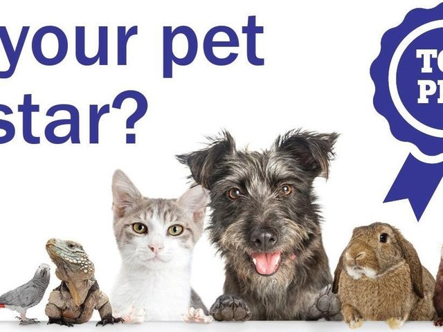 Top Pet competition launches today