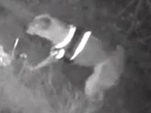 The dog on CCTV