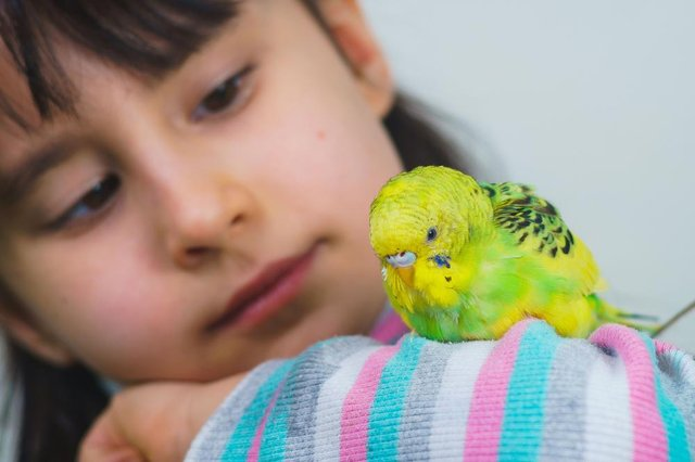A budgie can make the ideal pet for children of all ages.